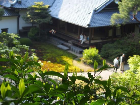 青蓮院の庭園は池泉回遊式庭園。歩いてまわれます。