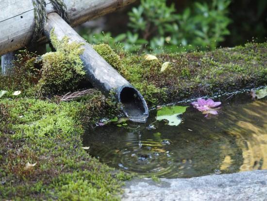 豊臣秀吉寄進の青蓮院の一文字手水鉢
