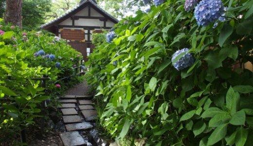 紫陽花の名所・藤森神社