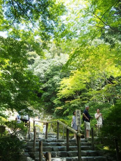 西芳寺の庭園を模した庭。緑が美しい。
