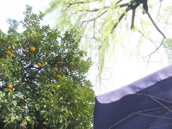 柳の木とオレンジの実がなる木の下の席がオススメ!