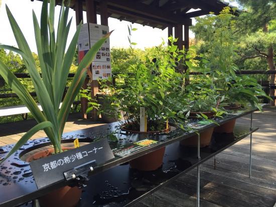 20150929藤袴と和の花展11