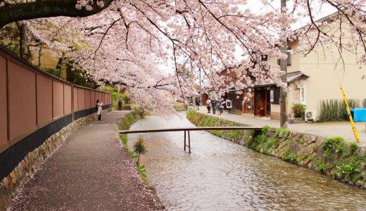 寺社仏閣だけじゃない京都の桜🌸