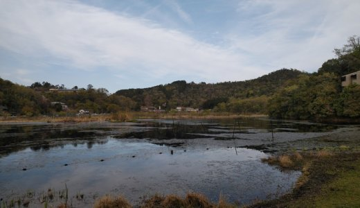 深緑のシーズン到来!少し足を伸ばして行ってみたい池特集!②深泥池