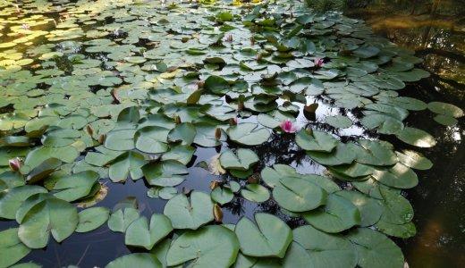 深緑のシーズン到来!少し足を伸ばして行ってみたい池特集!③蒼龍池(平安神宮)