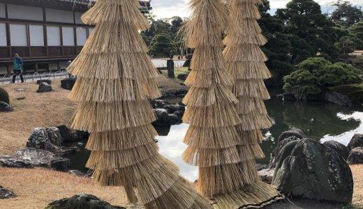 冬の風物詩!二条城の蘇鉄(ソテツ)