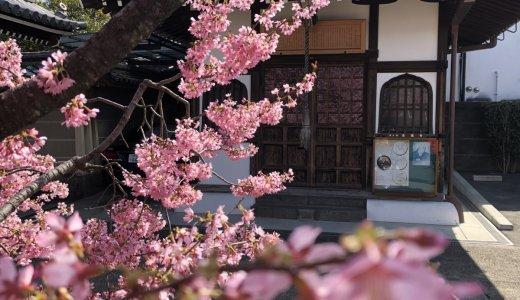 春の訪れを予感させる桜:長徳寺