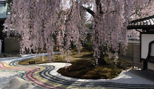 京都市内のお花見スポット特集(3/26時点)
