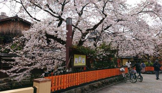 自転車でお花見②~祇園周辺編~