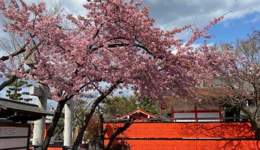 桜咲く 車折神社