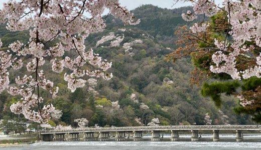 3/31 朝一撮れたて(?)桜情報!