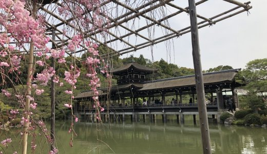 有名な文豪作品にも登場する桜が満開!:平安神宮