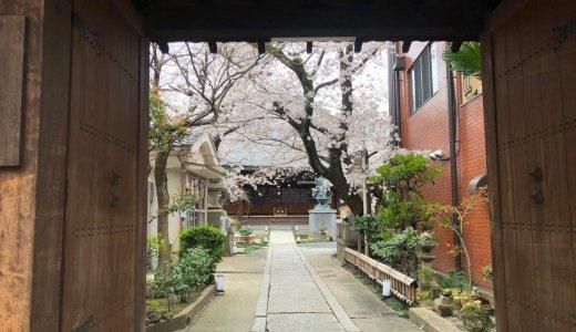 洛南エリアの隠れた名所「桜寺」