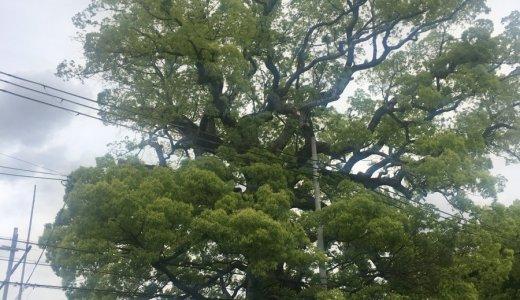 自然にあふれている 新熊野神社