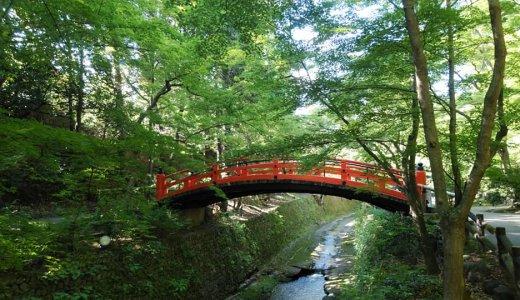 私の好きな京都の「緑」:北野天満宮の御土居
