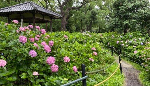 紫陽花まつり 藤森神社