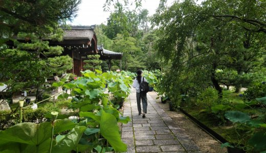 「蓮の寺」からです!:法金剛院(右京区)