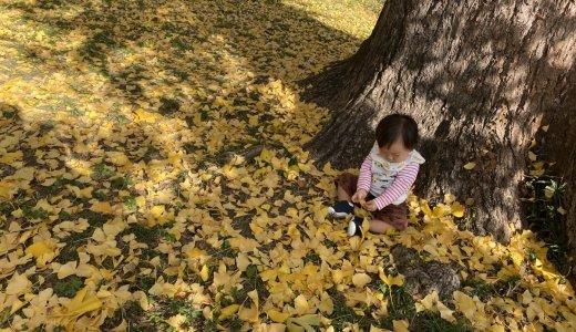 【京都御苑】母と子の森で紅葉ピクニック