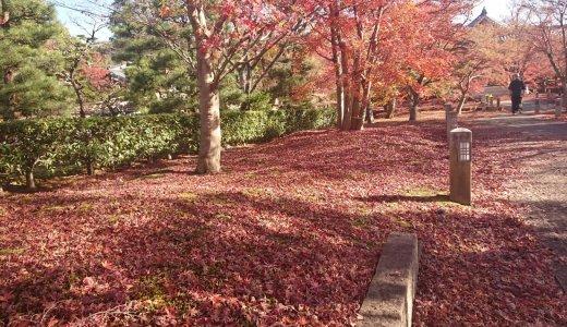 [2020年11月24日]京都の紅葉情報